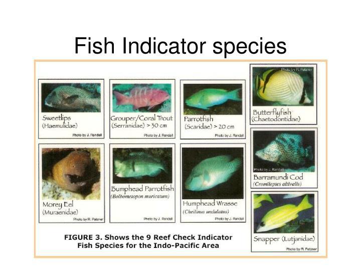 Fish Indicator species