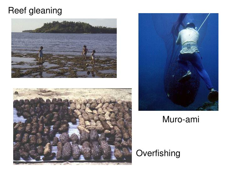 Reef gleaning