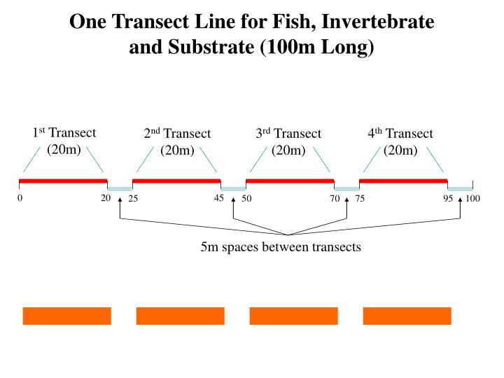 One Transect Line for Fish, Invertebrate