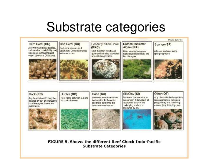 Substrate categories