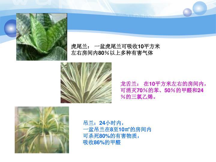 虎尾兰: 一盆虎尾兰可吸收