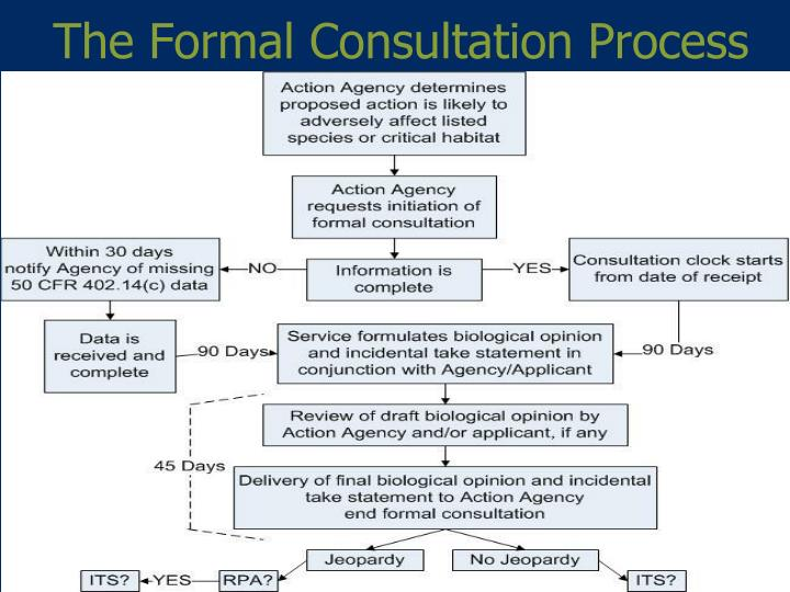 The Formal Consultation Process