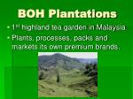 boh plantations