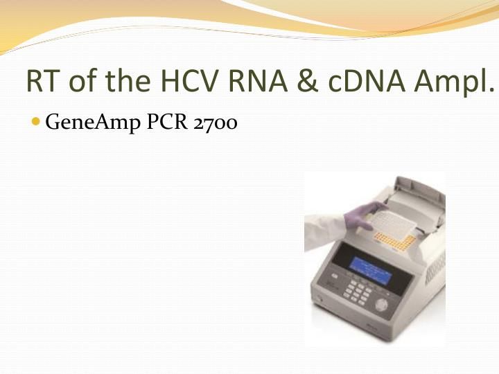 RT of the HCV RNA &