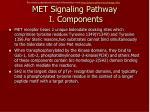 met signaling pathway i components