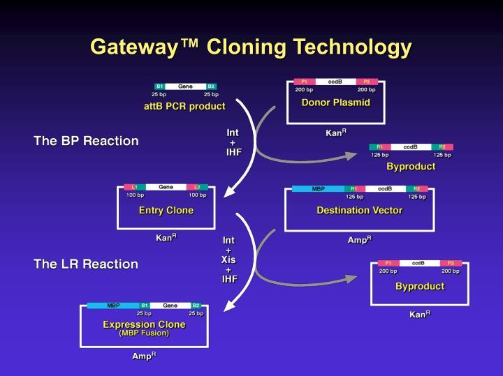 Gateway™ Cloning Technology