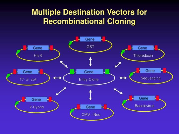 Multiple Destination Vectors for