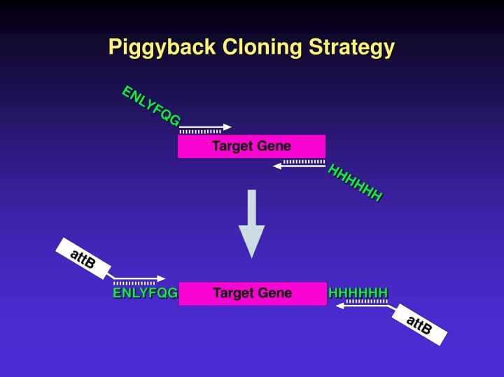 Piggyback Cloning Strategy
