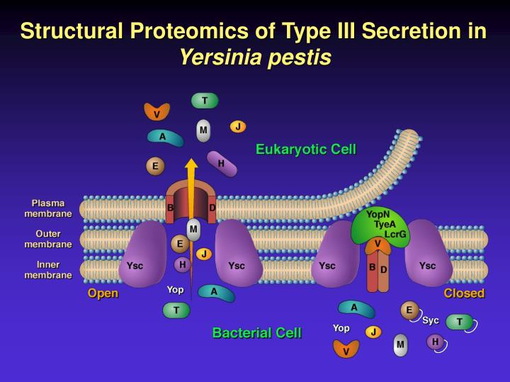 Structural Proteomics of Type III Secretion in