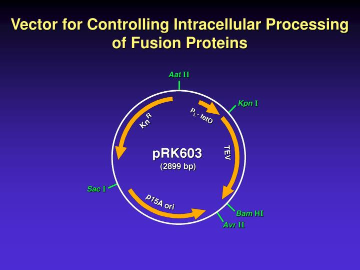 Vector for Controlling Intracellular Processing of Fusion Proteins