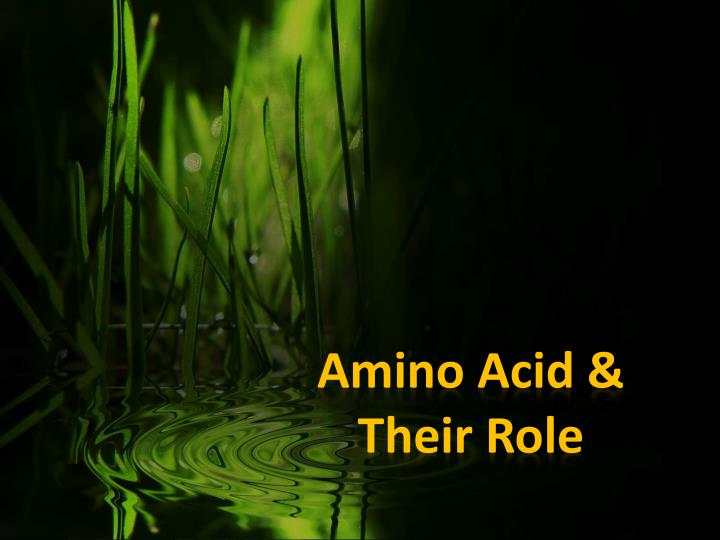 amino acid their role
