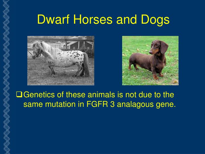 Dwarf Horses and Dogs