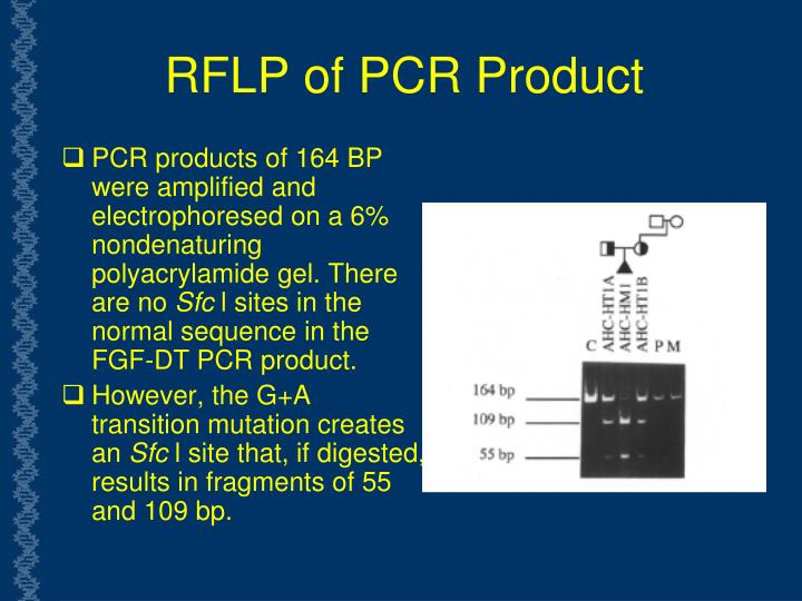 RFLP of PCR Product