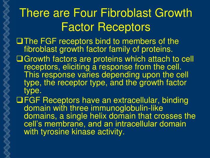 There are Four Fibroblast Growth Factor Receptors
