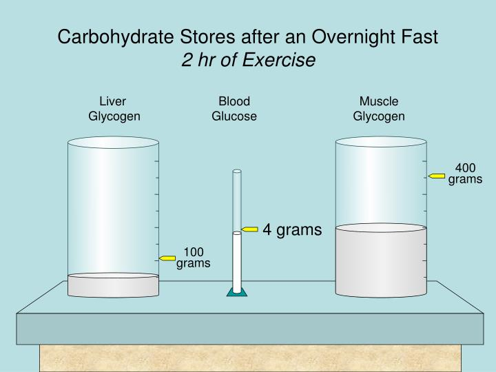 Carbohydrate Stores after an Overnight Fast