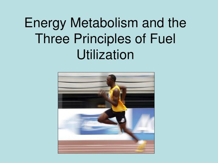 Energy Metabolism and the Three Principles of Fuel Utilization
