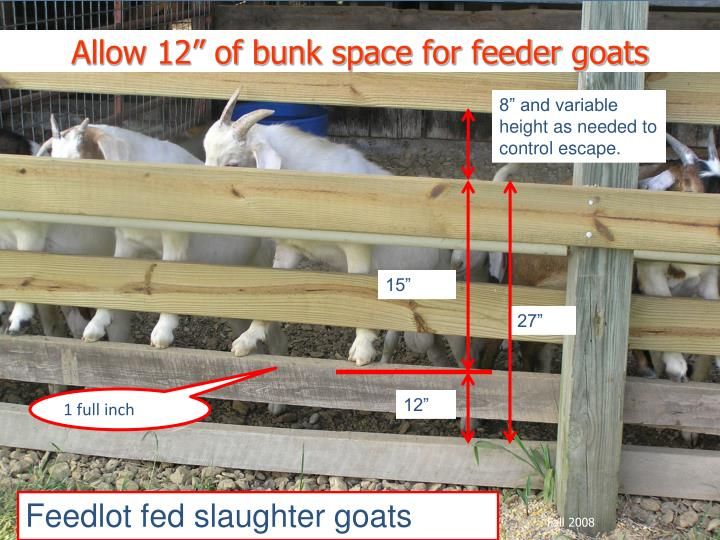 "Allow 12"" of bunk space for feeder goats"