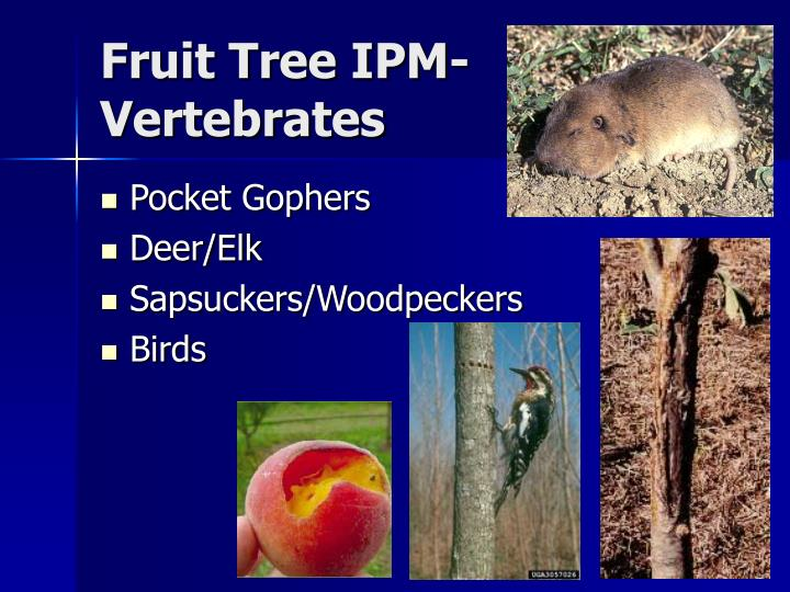 Fruit Tree IPM-Vertebrates