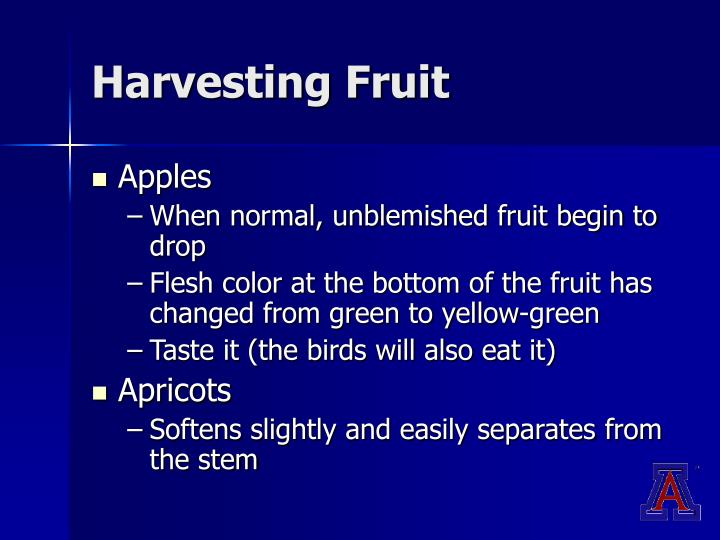Harvesting Fruit