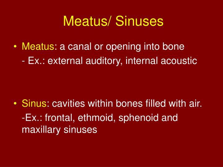 Meatus/ Sinuses
