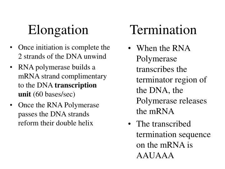 Once initiation is complete the 2 strands of the DNA unwind