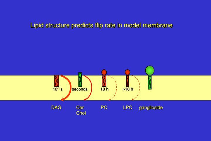 Lipid structure predicts flip rate in model membrane