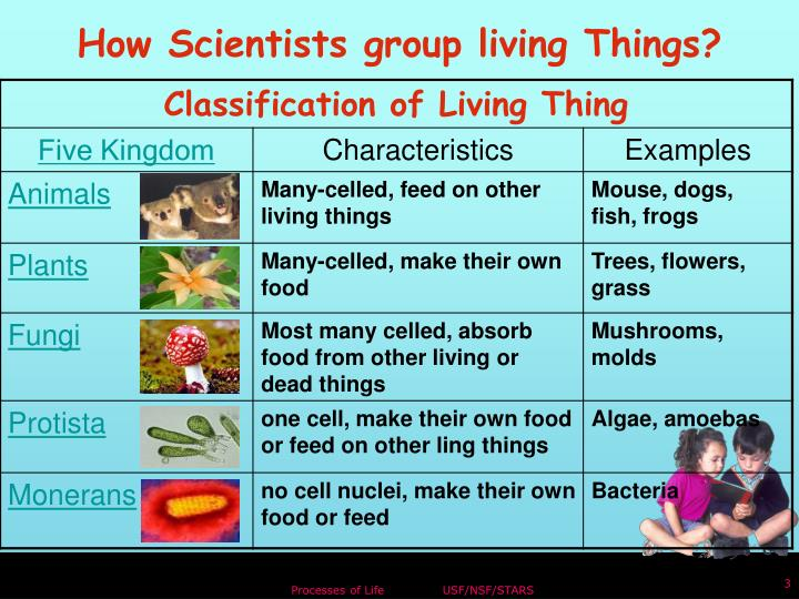 How Scientists group living Things?