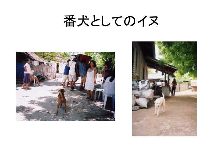番犬としてのイヌ