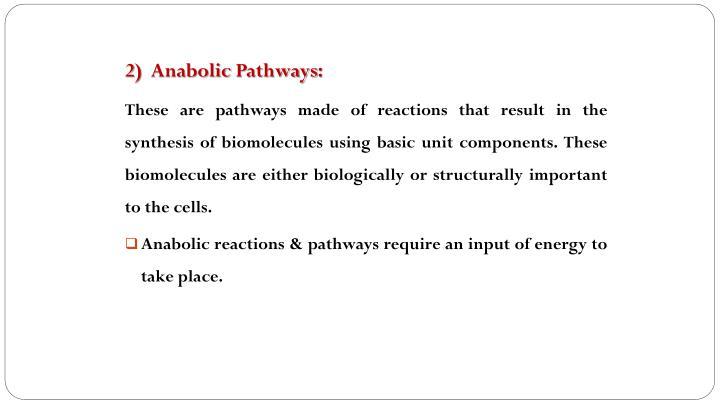2)  Anabolic Pathways: