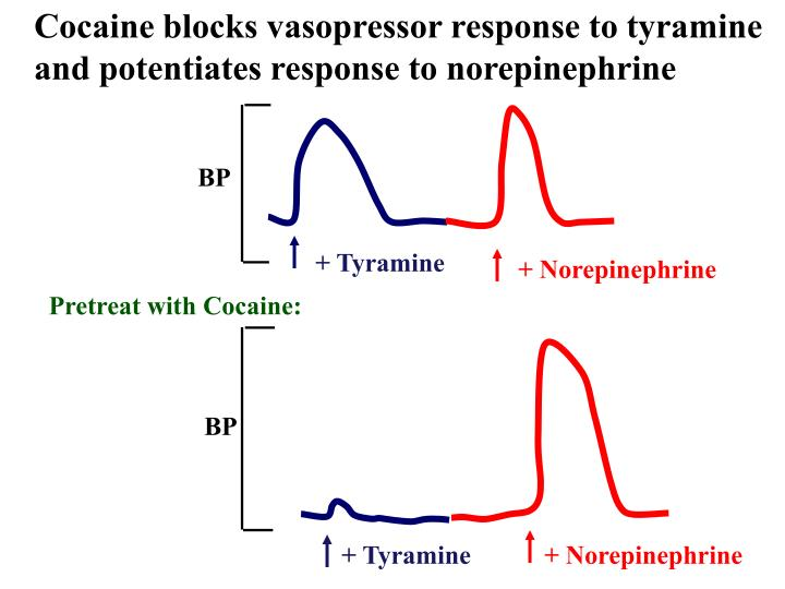 Cocaine blocks vasopressor response to tyramine and potentiates response to norepinephrine