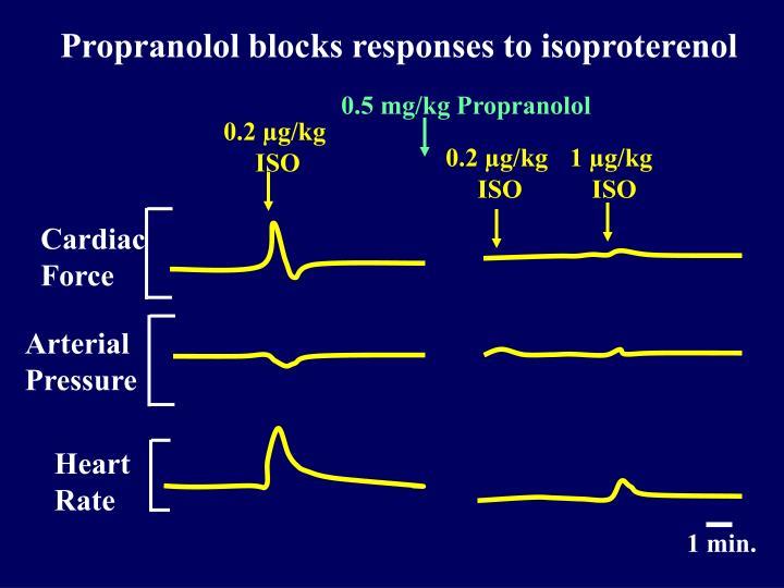Propranolol blocks responses to isoproterenol