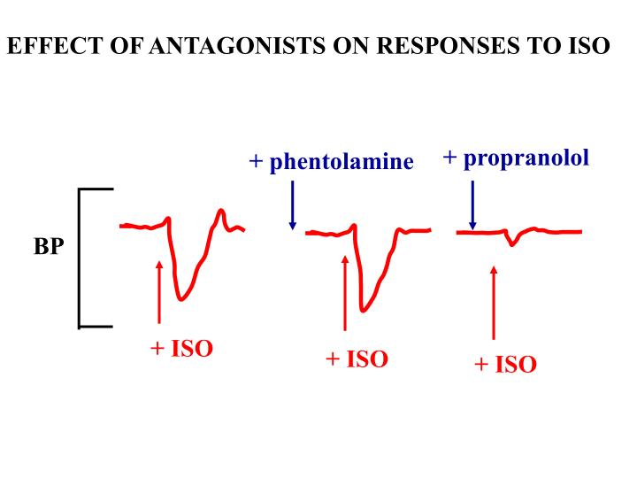 EFFECT OF ANTAGONISTS ON RESPONSES TO ISO