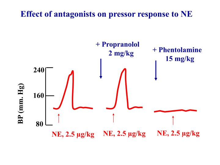 Effect of antagonists on pressor response to NE