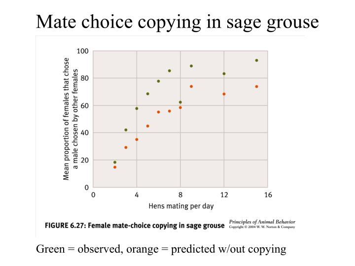 Mate choice copying in sage grouse