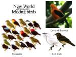 new world lekking birds