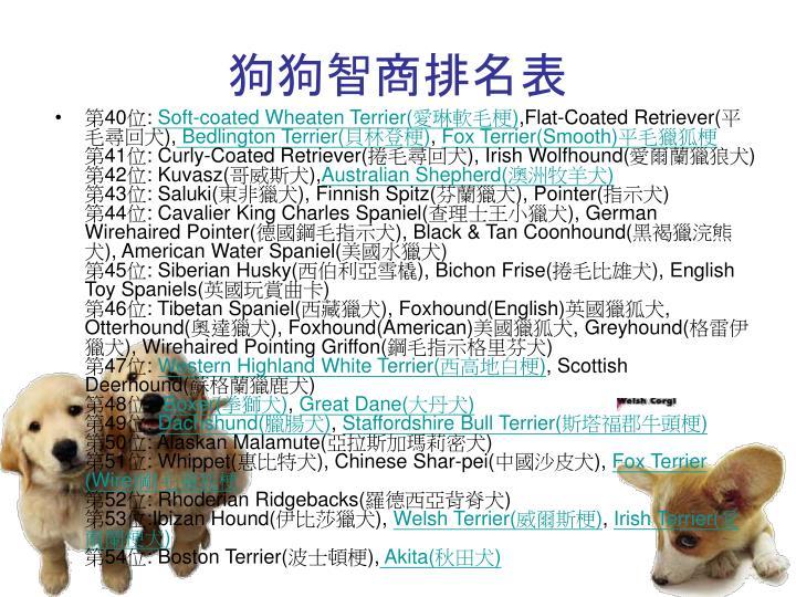 狗狗智商排名表