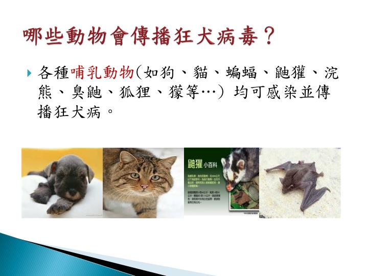 哪些動物會傳播狂犬病毒?