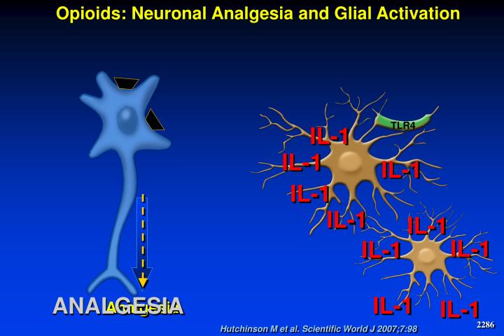 Opioids: Neuronal Analgesia and Glial Activation