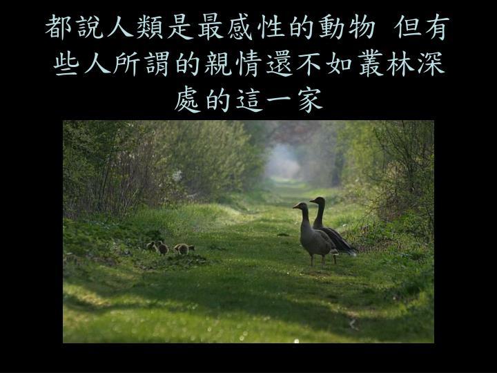 都說人類是最感性的動物 但有些人所謂的親情還不如叢林深處的這一家