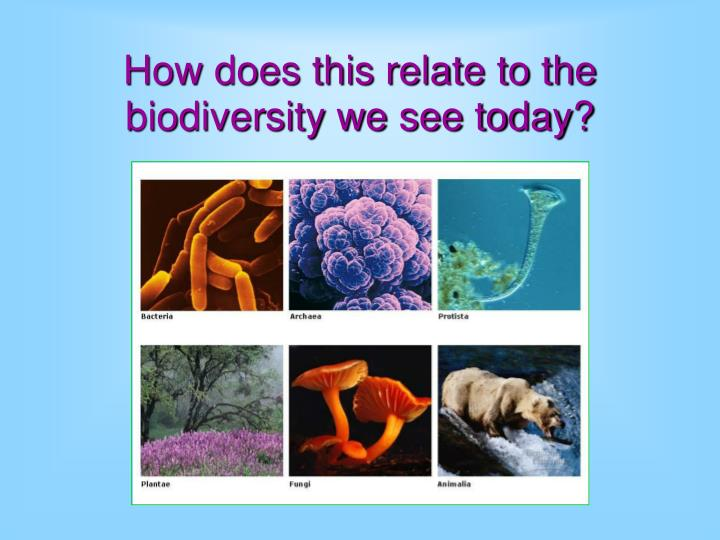 How does this relate to the biodiversity we see today?