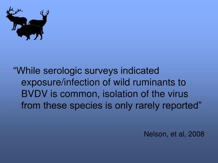 """""""While serologic surveys indicated exposure/infection of wild ruminants to BVDV is common, isolation of the virus from these species is only rarely reported"""""""