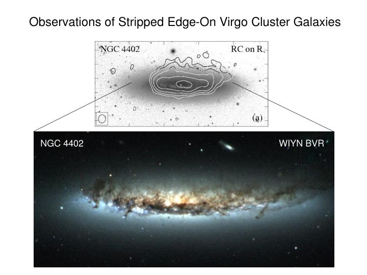 Observations of stripped edge on virgo cluster galaxies