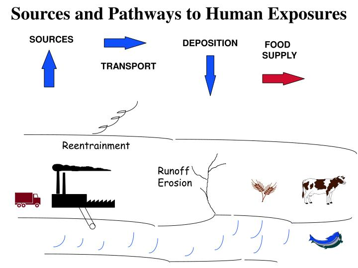 Sources and Pathways to Human Exposures
