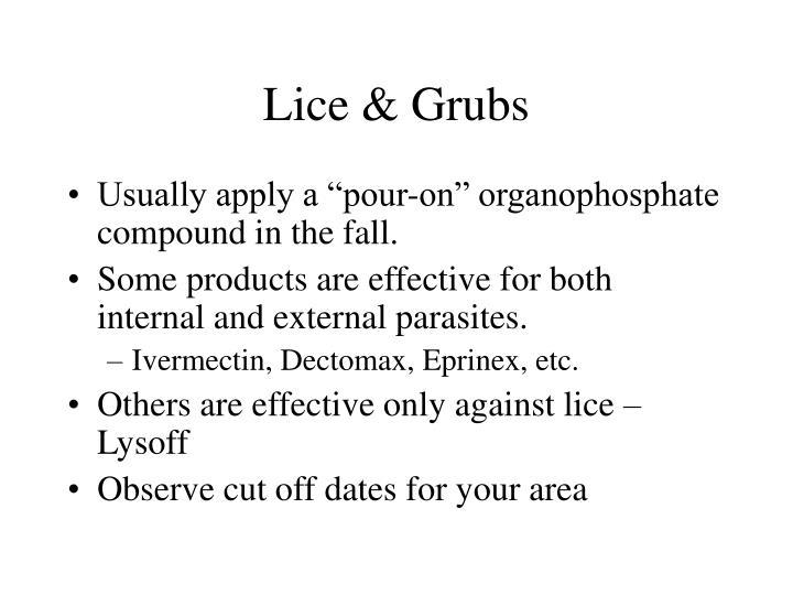 Lice & Grubs