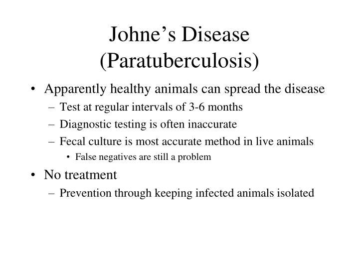 Johne's Disease (Paratuberculosis)
