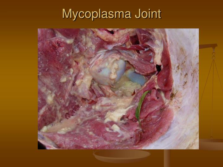 Mycoplasma Joint
