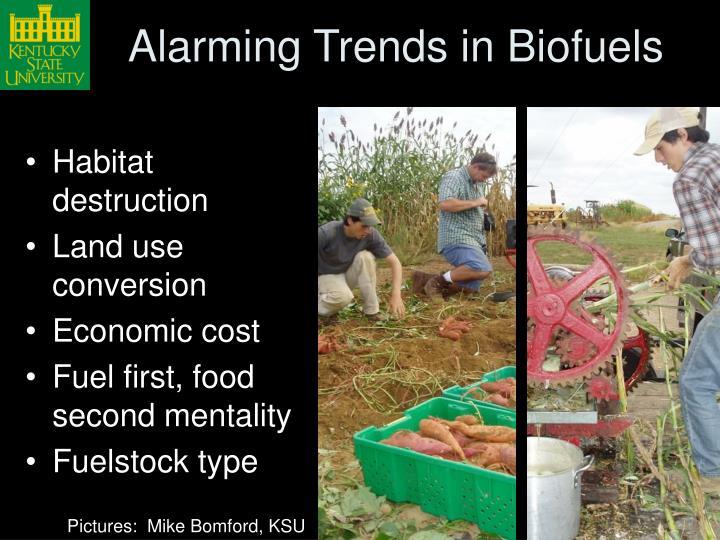Alarming Trends in Biofuels