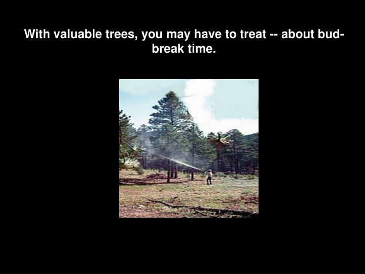 With valuable trees, you may have to treat -- about bud-break time.