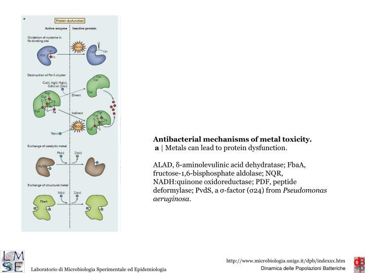 Antibacterial mechanisms of metal toxicity.