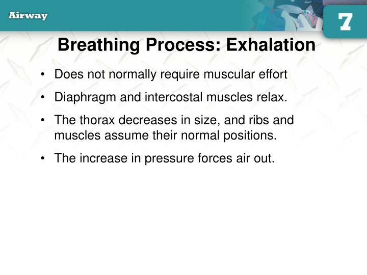 Breathing Process: Exhalation
